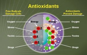 Antioxidants vs. Free Radicals
